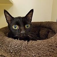 Adopt A Pet :: Magic - Elyria, OH