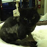 Adopt A Pet :: Q-Tip - St. James City, FL