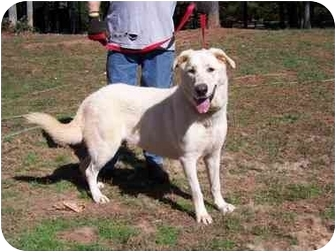 Maremma Sheepdog Dog for adoption in Covington, Georgia - Princess