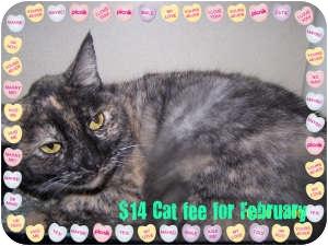 Domestic Shorthair Cat for adoption in Salem, Ohio - Nani