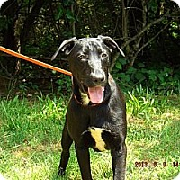 Labrador Retriever Mix Dog for adoption in Oakland, Arkansas - Barker