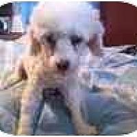 Adopt A Pet :: Bree - North Jackson, OH