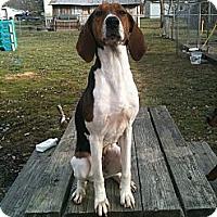 Adopt A Pet :: Bailey - Linton, IN