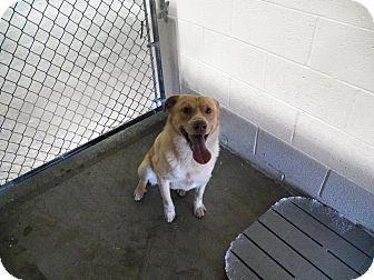 Husky Mix Dog for adoption in Osceola, Arkansas - Savannah