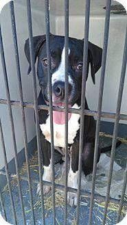 Boxer Mix Dog for adoption in Glenpool, Oklahoma - Zeus
