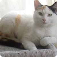 Adopt A Pet :: LYDIA-$35.00 - Buford, GA