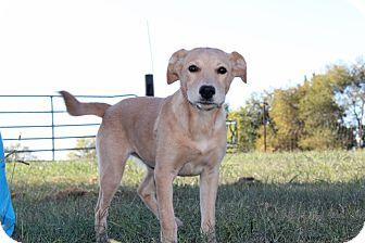 Labrador Retriever Mix Dog for adoption in Harmony, Glocester, Rhode Island - Sunshine