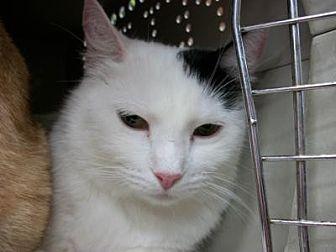 Adopt A Pet :: Preston  - Dallas, TX