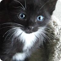 Adopt A Pet :: Felicia - Central Falls, RI