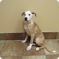 Adopt A Pet :: Renny *Petsmart GB* - Appleton, WI