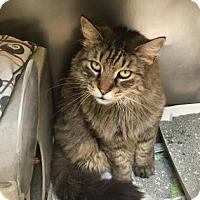 Adopt A Pet :: Shoo - Philadelphia, PA