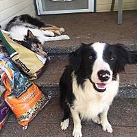 Adopt A Pet :: Cyrus - Bellingham, WA