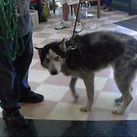 Adopt A Pet :: Kenai - Oakland, CA