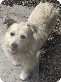 Terrier (Unknown Type, Small) Mix Dog for adoption in Norwalk, Connecticut - Richmond -adoption pending