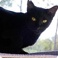 Adopt A Pet :: Trek - Palm City, FL