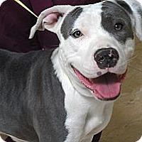 Adopt A Pet :: DELILAH - Malibu, CA