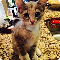 Adopt A Pet :: Lona - St. Louis, MO