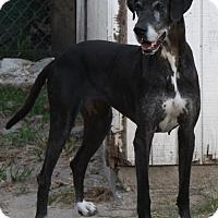 Adopt A Pet :: Stella - Jupiter, FL