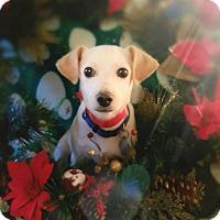 Adopt A Pet :: Billy - Homewood, AL