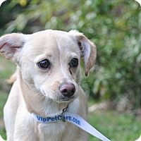 Adopt A Pet :: Princess - Tumwater, WA