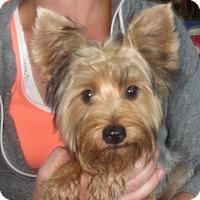 Adopt A Pet :: Adriana - Greenville, RI