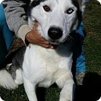 Adopt A Pet :: Aries - Bristol, VA