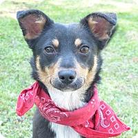 Adopt A Pet :: Daisy - Mocksville, NC