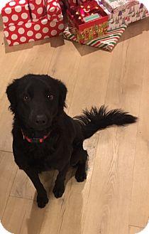 Border Collie/Mixed Breed (Medium) Mix Dog for adoption in Las Vegas, Nevada - Smokey