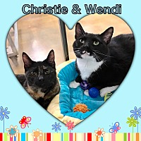 Calico Cat for adoption in Atco, New Jersey - Christie