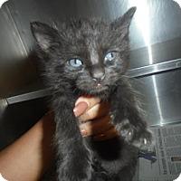 Adopt A Pet :: Minnie - Baton Rouge, LA