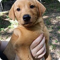 Adopt A Pet :: Charlie- no longer accepting a - Manchester, NH