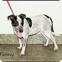 Adopt A Pet :: Fanny - Ada, OK