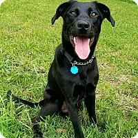 Adopt A Pet :: BOJANGLES - Portland, ME