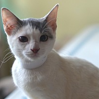 Adopt A Pet :: Betty - Brooklyn, NY