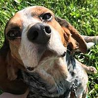 Adopt A Pet :: Finch - Bloomington, IL