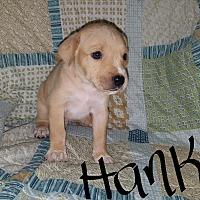 Adopt A Pet :: Hank - Sussex, NJ