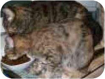 Calico Cat for adoption in Pasadena, California - Deliah and Olivia