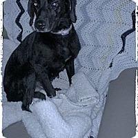 Adopt A Pet :: Winter's Story - Hartsville, TN