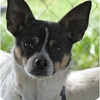 Adopt A Pet :: Cody - Providence, RI