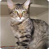 Adopt A Pet :: Andy - Mesa, AZ