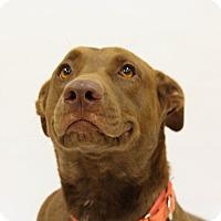 Adopt A Pet :: Avalon - Mission Viejo, CA