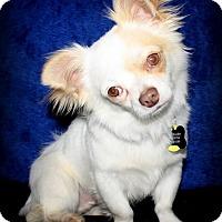 Adopt A Pet :: Bordentown NJ - Tyke - New Jersey, NJ