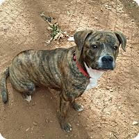 Adopt A Pet :: Celine - Lawrenceville, GA