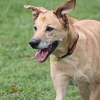 Adopt A Pet :: Cinnamon - Bremo Bluff, VA
