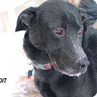 Adopt A Pet :: Bandit - Denver, CO