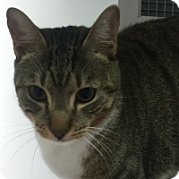 Adopt A Pet :: Camille - Cumming, GA