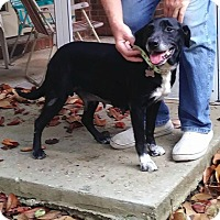 Adopt A Pet :: Willow - Ocala, FL