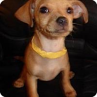 Adopt A Pet :: Melvin - San Diego, CA