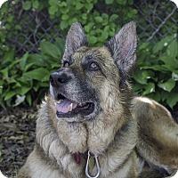 Adopt A Pet :: Tova - Wayland, MA