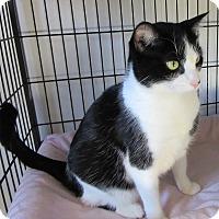 Adopt A Pet :: Barlowe - Glenwood, MN